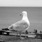 Brighton Gull by KAGPhotography