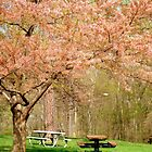 Picnic in the Park   ^ by ctheworld