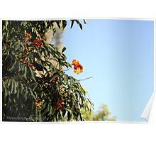 Israeli Safari Flowers With Bright Blue Sky Poster