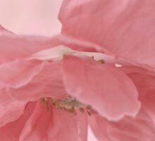 Pretty Pink Poppy Macro Sticker