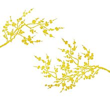 Cherry blossoms - gold on white Photographic Print