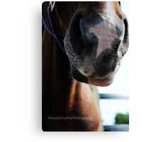 Horses Muzzle Soft and Touchable Canvas Print