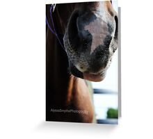 Horses Muzzle Soft and Touchable Greeting Card