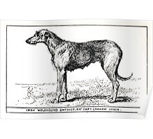 All about dogs a book for doggy people Charles Henry Lane 1900 0133 Irish Wolfhound_jpg Poster