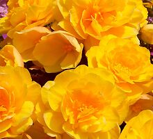 Yellow Roses by maryjanetait
