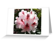 Rhododendron in Full Bloom Greeting Card