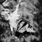 Butterfly Black and White by angelandspot