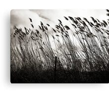 Bending in the Wind  Canvas Print