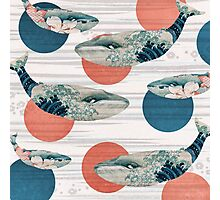 Whale and Polka Dots Photographic Print