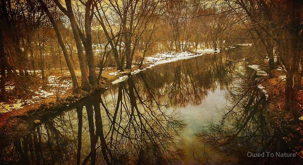 Winter trees along the Assabet River by Owed To Nature