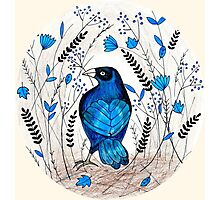 Bowerbird's Treasures Photographic Print