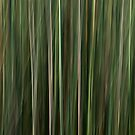 Reeds in the Wind _ North Stradbroke Island by Barbara Burkhardt