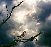 Beneath a Complex Sky. by Kenart