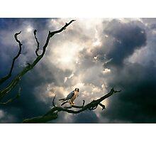 Beneath a Complex Sky. Photographic Print