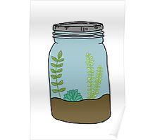 mason jar succulent plants  Poster
