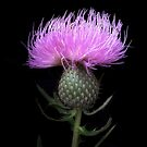 Thistle in the Grasslands by Jing3011