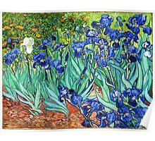 Irises By Vincent Van Gogh Poster