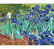 Irises By Vincent Van Gogh Photographic Print