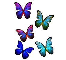 Butterflies of Color Photographic Print