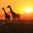 Giraffe - Sunset Gold and Harmony - African Wildlife by LivingWild
