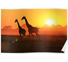 Giraffe - Sunset Gold and Harmony - African Wildlife Poster