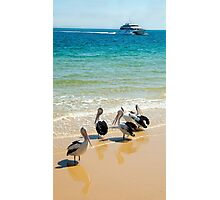 The Pelican Gang Photographic Print