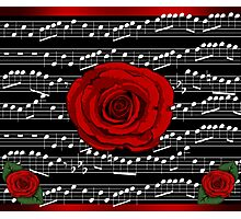 Music of the Night Rose Photographic Print
