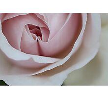 Folding Petals Photographic Print