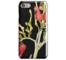 grevillea latifolia iPhone Case/Skin