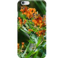 A busy bush iPhone Case/Skin