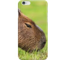 Grazing Capybara iPhone Case/Skin