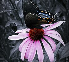 Social Butterfly by Dawn Beck