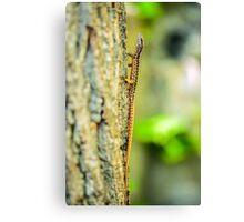 Lizard on a tree bark Canvas Print