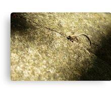 Small lizard  Canvas Print