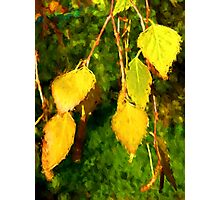 Golden Leaves of Autumn Photographic Print
