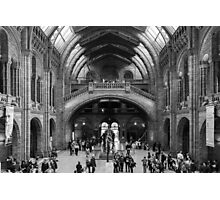 Natural History Museum Photographic Print
