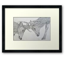Stag Fight Framed Print