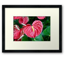 Bright Red Plant Framed Print