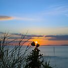 sunset over loop head with silhouetted wild tall thistles by morrbyte
