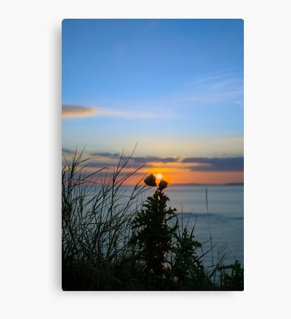 sunset over loop head with silhouetted wild tall thistles Canvas Print
