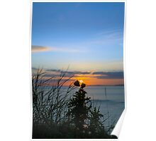 sunset over loop head with silhouetted wild tall thistles Poster