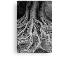 root tree Canvas Print