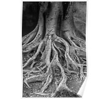 root tree Poster