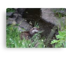 Otter in a River Canvas Print
