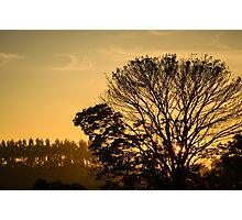 sunset with silhouetted tree Photographic Print