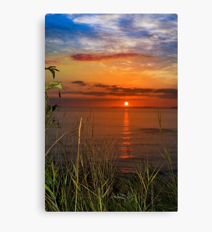 sunset over loop head with wild thistles Canvas Print