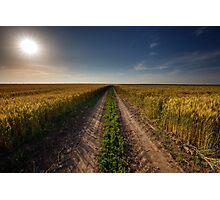Rural road through wheat field Photographic Print