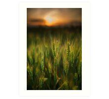 Wheat field at sunset, sun in the frame Art Print