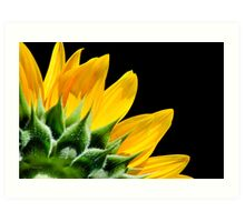 Sunflower Petals Art Print