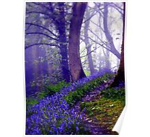 Bluebells in the Forest Rain Poster